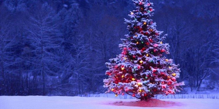 Christmas Trees, A History